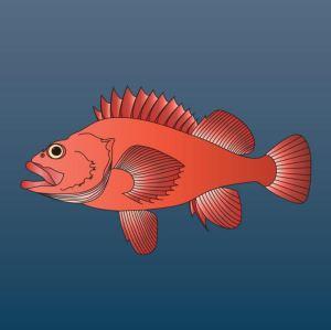 Normal rockfish