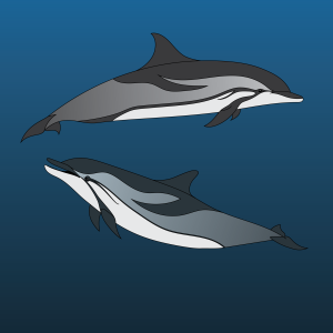 striped-dolphins2